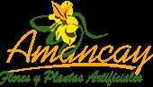 Amancay Flores